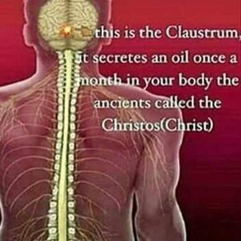 claustrum 2